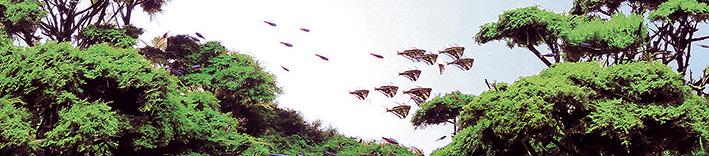0001-fish.jpg