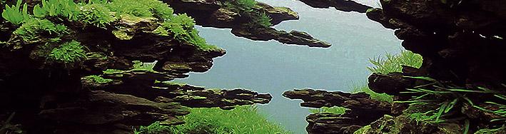 0003-fish-re.jpg