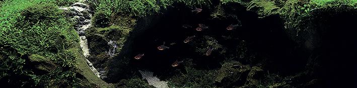 0011-fish.jpg