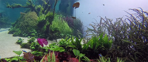 Amano 2015 -Libon tank underwater
