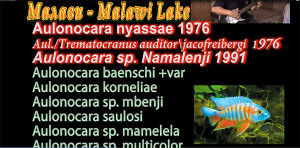 Malawi breeding list 3 re
