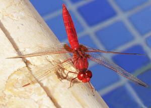 Dragonfly Cyprus