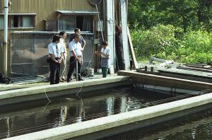 Koi-farm Amano 2006 2