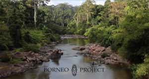 Borneo pr. - film 2016