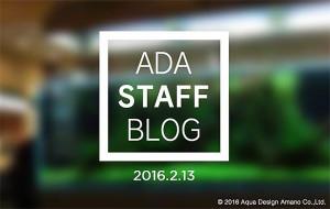 ADA Staff blog 2016