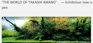 Amano exhibit 2016 aug icetan