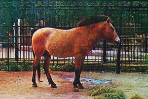 mzoo-1981-prz-re