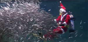 santa-in-aquarium-2016-dec