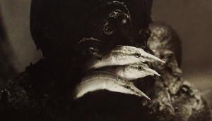 Macrognathus fry 1983