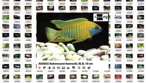 Aqualog Glaser 1