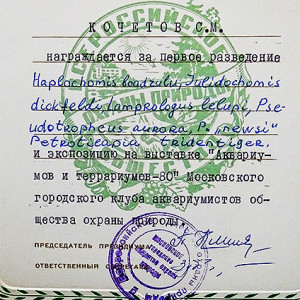 Diplom MGKAT 80 1 re