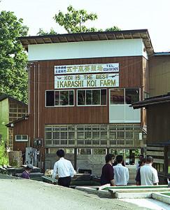 Amano Koi-farm 2