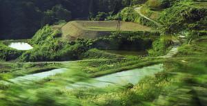 Amano Koi-farm 4