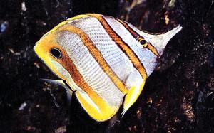 Marine fish 2017 Shubtavy 1