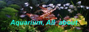aquarium-all-about-200