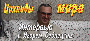 Sedetsky video banner 1 2017