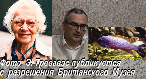 Sedetsky video banner 2 2017