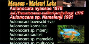 Malawi breeding list 3 re