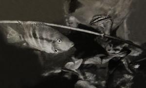 Meeki - nannacara 1969 - 2017