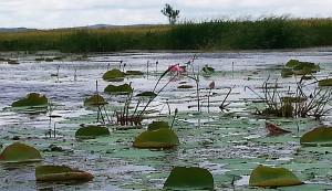 Amur lake 2017