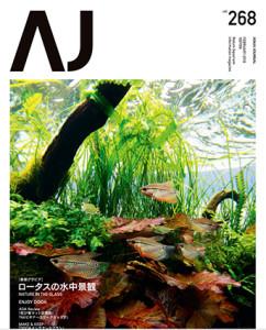 AJ #268 ed jap