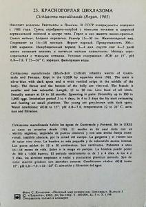 PMA Cichlids C. maculicauda 2018 3 l