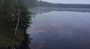 Lake biotops 2018 4
