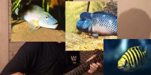 Aqua boogie 2012-2018 1