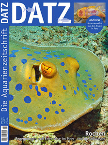 DATZ 2018-07 august ed_cover-klein_