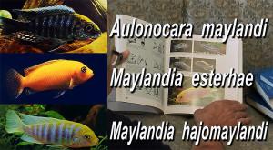 Mayland books 2018 2