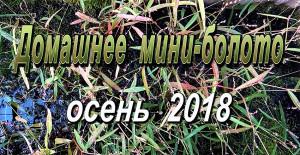 Mini-swamp autumn 2018 sept web