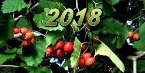 Mini-swamp autumn 2018 sept web 5