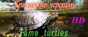 Tame turtles (2)