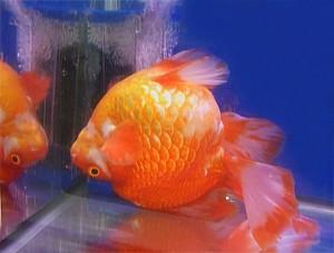 Bassler bio fish 2018