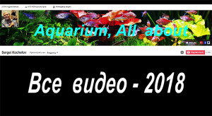 All video 2018 web 3