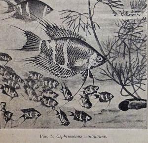 New fish 1907-2018 3