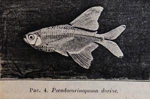New fish 1907-2018 6