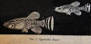 New fish 1907-2018 8
