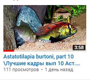 Video - 2018 111 1