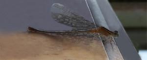 Adil dragonfly 2019 Jan ed 1