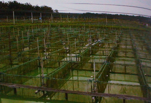 Fish farm Malaysia OFI 2014