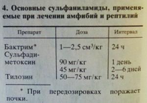 Terrarium Kudrjavtsev 1989 - 2019 2