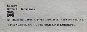 Basset dog 1989 2019 1