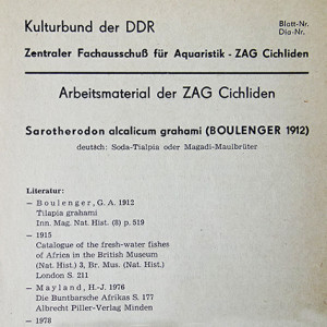 ZAG Cichliden 3