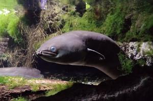 Anna 2019 May aquarium ed