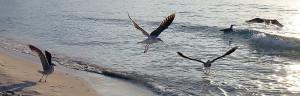 Cyprus 2018 may birds