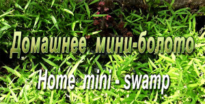 Home mini-swamp 2019