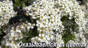 Bronzovki 2019 1