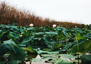 Hanka lake 4