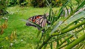 Anna 2019 september 10 2 butterfly